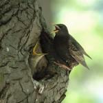 baby-birds-2